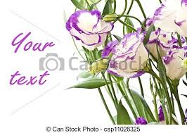 beautiful purple and white flowers. Perfect Purple Lisianthus Flowers  Csp11028325 And Beautiful Purple White Flowers A
