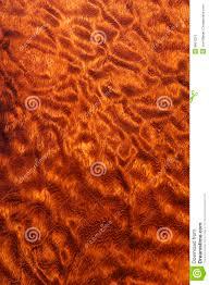 Quilted pomele sapele wood stock photo. Image of exotic - 8861334 & Quilted pomele sapele wood Adamdwight.com