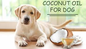 use coconut oil for dog skin problems