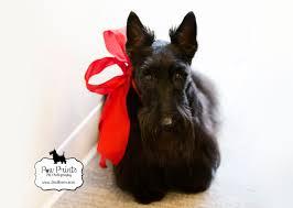 Vera Bradley Scottie Dog Pattern Custom Design