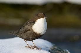 Комплексная контрольная работа класс Однажды ясным морозным утром я гуляла на лыжах по лесу Когда я вышла к небольшой знакомой речке ещё издали увидела у проруби маленькую бурую птичку
