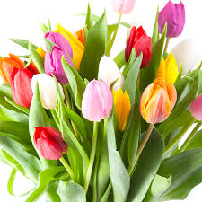 50 Count Tulips Mixed Bulbs in the ...