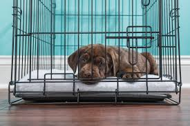Light Blue Dog Crate Should You Cover Your Dogs Crate Cuteness