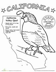 Coloring pages birds will introduce the child to a variety of birds on our planet. U S State Bird Coloring Pages Education Com