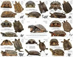 Turtle Chart Turtle Habitat Pet Turtle Turtle Care