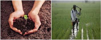 pollution its causes impact and prevention the official  control soil pollution