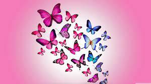 Ultra Hd Butterfly Wallpaper For Laptop