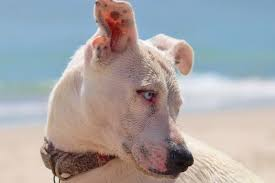 can dogs get skin cancer