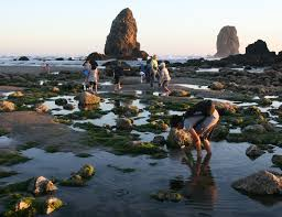 Sunset Beach Oregon Tide Chart Cannon Beach Low Tide Adventures At Haystack Rock Clatsopnews