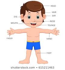 Body Part Chart For Toddlers 1000 Human Body Parts Stock Images Photos Vectors