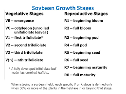 Soybean Ppt Download