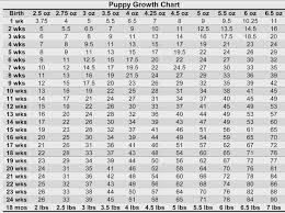 Doberman Growth Chart Goldenacresdogs Com