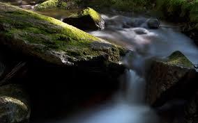 Jungle stream river rocks 2017 HD ...