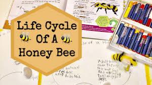 Life Cycle Of A Honey Bee Homeschool Activity