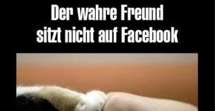 Wahre Freunde Sprüche Facebook Poolvogel