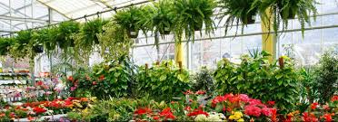 garden centers nj. We Are Constantly Traveling The Country Looking For Most Exciting In New And Unusual. Also Have A Wonderful Gift Shop, Complete With Everything Garden Centers Nj