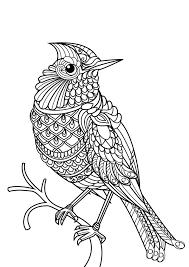 bird with plex and beautiful patterns