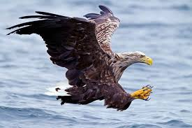 The Largest Eagles Top 10 Dinoanimals Com