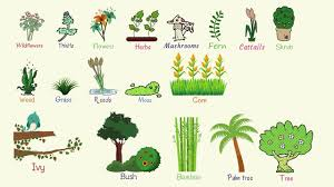 Plant Names List Of Common Types Of Plants And Trees In English With Pictures