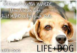 Dog Passing Quotes Custom Quotes About Dogs Passing Quotesgram Dog Passing Quotes