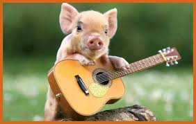Cute Pig Wallpapers (66+ background ...