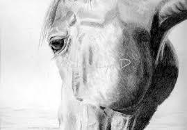 40 Disegni A Matita Animali Realistici Disegno Arte