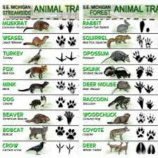 Latest Animal Tracks Id Sheets Animal Tracks Animals