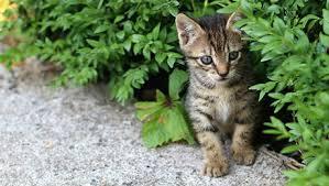 「kitten microchip」の画像検索結果