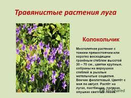 Презентация на тему Луг природное сообщество Что несеяно  6 Травянистые растения луга