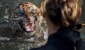 tiger cubs p swim test