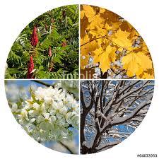 Bildergebnis für Jahreszeiten