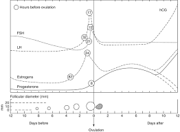 Ultrasound In Follicle Monitoring For Ovulation Induction
