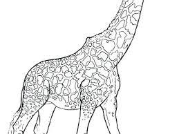 Giraffe Color Page Alterneinfo