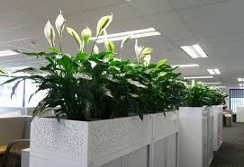 office greenery. Noise Office Greenery