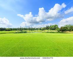 Field Green Grass Blue Sky Summer Stock Photo Royalty Free