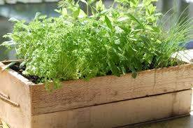 Small Picture Potted Herb Garden Ideas Garden Design Ideas