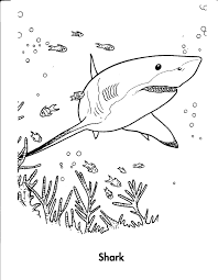 Small Picture Coloring Pages Animals Shark Coloring Page Picture Shark
