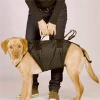 Gehhilfen & tragehilfen sind vor allem für kranke, verletzte, gehbehinderte und operierte hunde eine große hilfe im alltag, für treppen oder gassirunden. Darf Man Hund Treppen Steigen Mit Arthrose Oder Huftdysplasie Tiere Krank Tierarzt