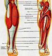 Admin Anatomy System Human Body Anatomy Diagram And