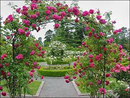 Small Picture Best Of Rose Garden Design Ideas Great