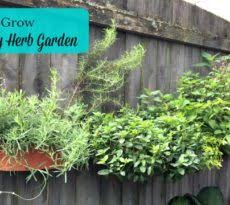 how to grow a herb garden. Growing A Culinary Herb Garden How To Grow