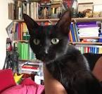 chat gratuit abbeville la rochelle