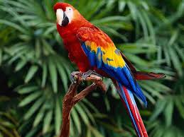 an essay article on the parrot herbweb parrots photo of a parrot