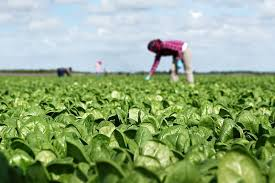 can organic food feed the world sustainable food systems initiative wsj photo