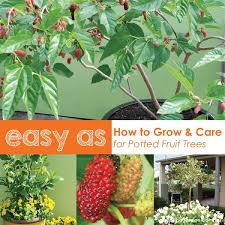 how to grow fruit trees in pots