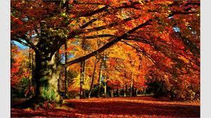 Microsoft Free Wallpaper Themes Get Autumn Colors Microsoft Store