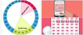 Ovulation Calendar Definition Hoool Health Wellness