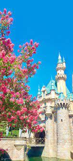 Disneyland Iphone Wallpaper - 1242x2688 ...