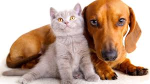 cats s dogs wallpaper 34809