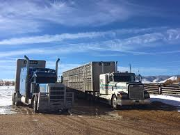 Hours of service with ELD mandate challenging for livestock haulers ...